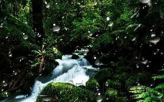 wp3 rain drops nature wallpapoer