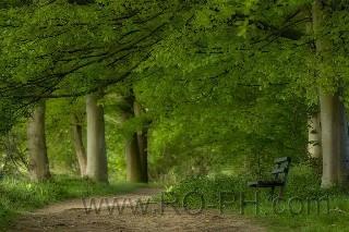 Bench Monday   Flickr