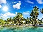 Beautiful tropics beach palm sunlight