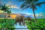 beach Sunrise tree animals elephant repack wallpaper nature